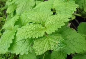 Iran Unveils World's First Herbal Medicine to Treat Alzheimer's