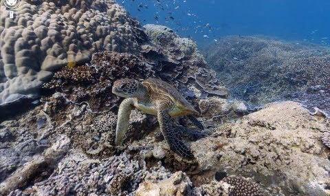 دنیای زیر آب اقیانوسها اکنون در نقشههای گوگل (ویدئو)