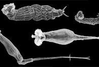 کرمهای منجمد ۲۴ هزار ساله در قطب شمال نه  تنها زنده شدند ...