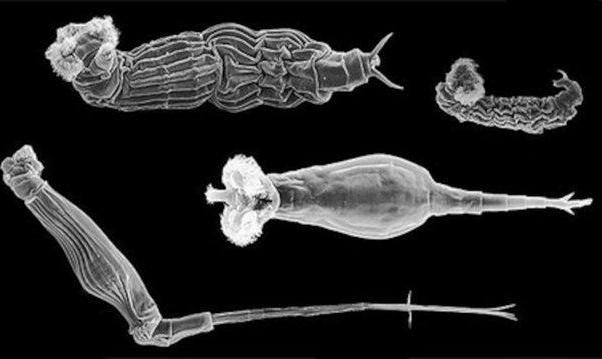 This Living Organism Survived 24000 Frozen Years and Can Now Still ...