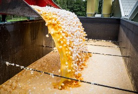 ۱۷ کشور درگیر تخم مرغهای سمی: بحران تخم مرغهای آلوده از اروپا به آسیا رسید