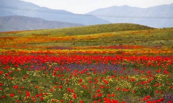 Festa di Primavera Nawrooz