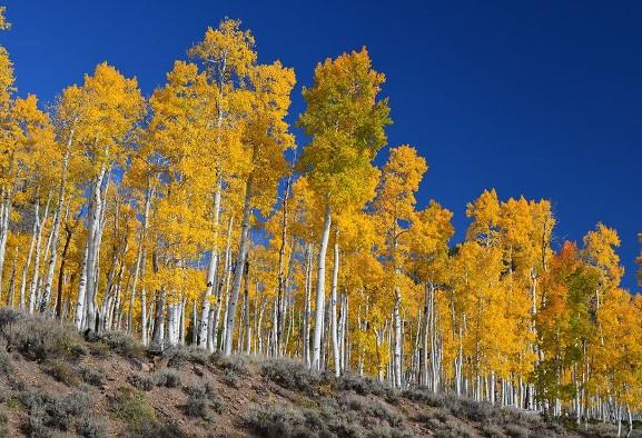 در پی گرمایش زمین قدیمیترین ارگانیزم زنده جهان در ...