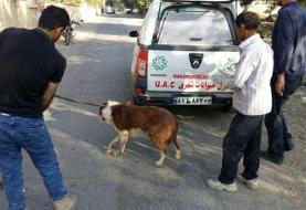 شهرداری اقدام به کشتار سگ ها نکرده است، برای عقیم سازی و واکسیناسیون بوده است