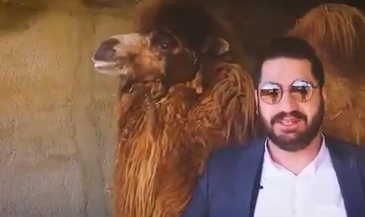 From Camel's Urine to Trump's Favorite Drug: New Claims ...