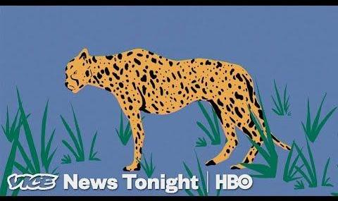 Did Political Paranoia Land Iranian Cheetah Conservationists on ...