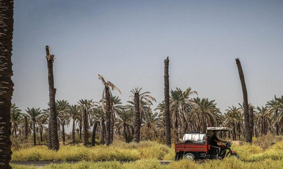 Thirsty and Beheaded! In Pictures: Drought-Stricken Shadegan Date ...