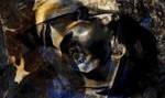 نمایشگاه آثار عکاسی نادر داوودی