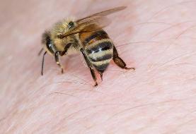 انستیتو پاستور ایران ادعای درمان کرونا با نیش زنبور عسل را رد کرد