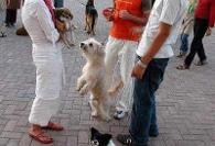سر تیتر اخبار پربیننده: بانوان سگ دوست، شاهکار نوجوانان والیبال، ...