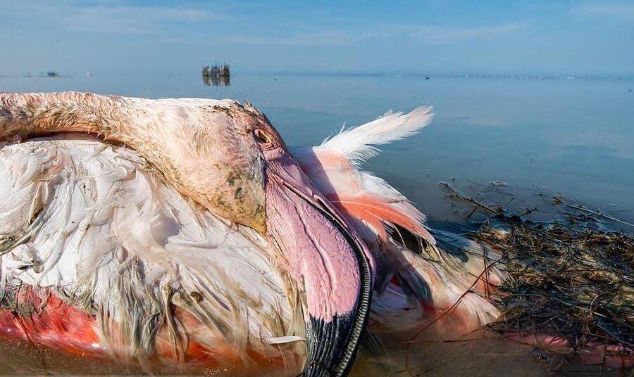 افشای راز مرگ عجیب ۲۰هزار پرنده مهاجر در میانکاله: پای تسویه حساب شکارچیان در میان بود؟