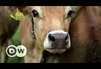 Europe's organic farming facing challenges, Video