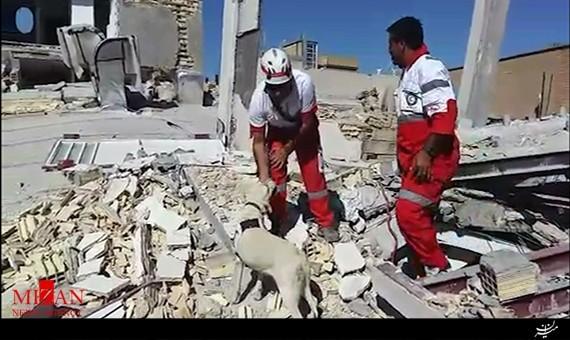 سگهای زندهیاب ۶ نفر را در زلزله کرمانشاه زنده نجات دادند + فیلم