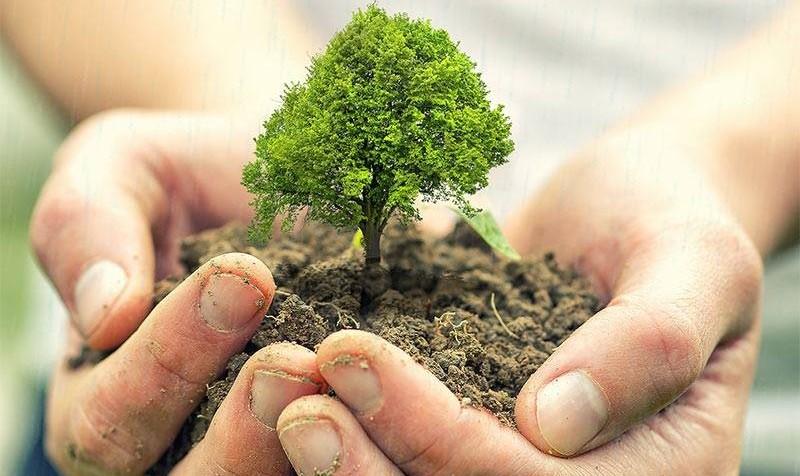 در شهرمان درخت بکاریم