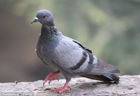 Four minutes after the New Year, Pigeon attacks supermarket in Tehran!