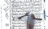 نمایشگاه آثار عکاسی و هنرهای دیجیتال نادر داوودی