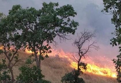 ادامه آتش سوزهای زنجیره ای یا عمدی در کشور: جزئیات آتشسوزی عمدی در بوستان نهجالبلاغه تهران