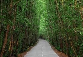 ۳۰ سال آینده جنگلی در شمال نخواهیم داشت! هشدار در مورد تولید چوب، آفات و کشاورزی: ارزش منابع طبیعی کشور از یک تیم فوتبال کمتر است!