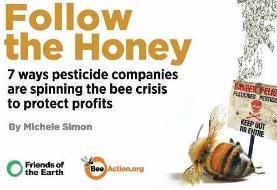 دانشمندان: چرا باید قدر زنبورهای بیعسل را بدانیم