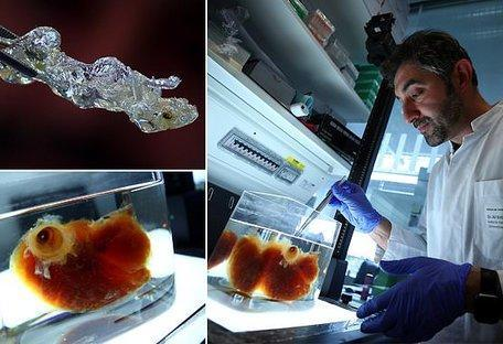 ساخت اعضای بدن انسان توسط محققان در آلمان به رهبری علی ارتورک برای ...