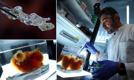 You May Soon Print Your Kidney and Heart! Turkish German Scientist ...