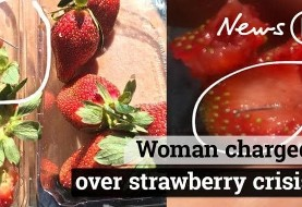 ادامه ماجرای توت فرنگیهای سوزن دار در استرالیا: یک زن دستگیر شد / انتقام کشاورز شاغل از کارفرمای بی انصاف؟