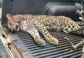 پلنگ الموت کشته شد! تصویری دردناک از محیط زیست الموت