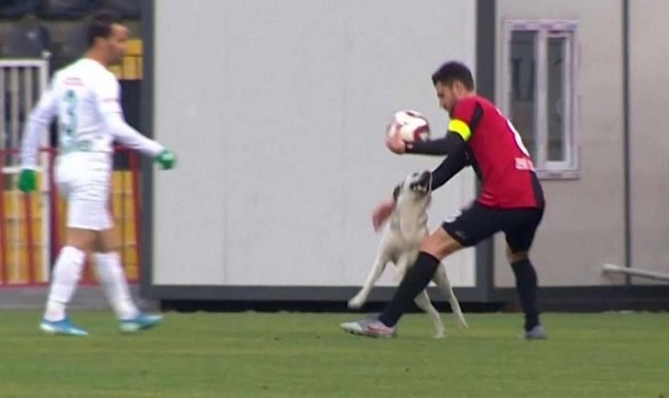 فیلم: ورود ناگهانی یک سگ در استانبول  به زمین فوتبال و باقی ماجرا