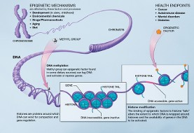 اپی ژنتیک: نقش موثر  اسید چرب پالمیتات در برنامه ریزی سلول ها