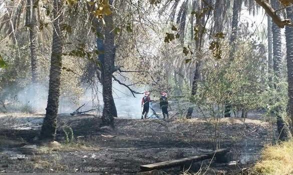 آتشسوزی گسترده در نخلستانهای شادگان: دو هکتار به خاکستر تبدیل شد