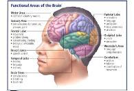 به گفته متخصص مغز آمریکایی تنیس روی میز بهترین ورزش برای مغز است