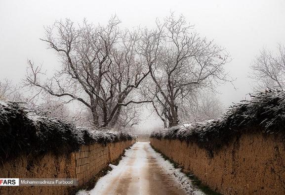 شیراز هم برف آمد و سفیدپوش شد! آلبوم تصویر: خوشحالی مردم