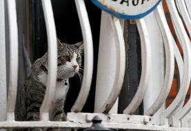 معمای گربه جولیان آسانژ