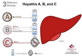 یک میلیون و ۸۵۰ هزار ایرانی و معتادان ناقل هپاتیت B و C هستند