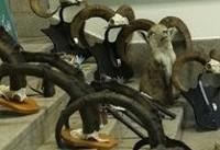 ابلاغ اخطار قانونی به بازار پرندگان خلیج فارس۲