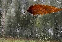 بارش باران در ۱۴ استان کشور/ دامنه های البرز و زاگرس برفی می شود
