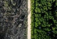 جاده ای که جان جنگل را نجات داد + عکس
