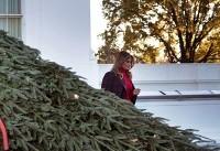 درخت ۶متری ملانیا ترامپ برای کریسمس +تصاویر