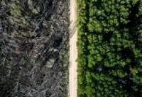 این جاده ناجی جنگل شد (+عکس)