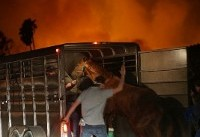 In California, dozens of horses perish in fires