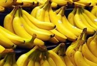 افزایش ۲۱ درصدی واردات موز در ۸ ماهه امسال
