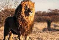 خطرناک ترین حیوانات برای انسان + عکس
