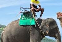 فیل سواری ستاره ثروتمند و مشهور در تایلند +عکس