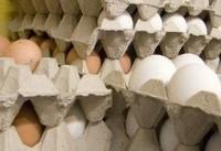 عرضه مرغ و تخم مرغ دولتی در تهران