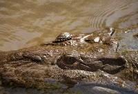 Croc takes fisherman in Australia