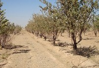 Iran, UNDP extend co-op on Carbon Sequestration Project