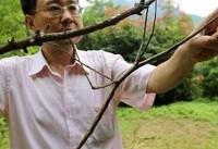 پرورش بزرگترین حشره دنیا در چین (+عکس)