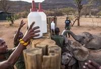 غذا دادن به بچه فیلها عکس روز نشنال جئوگرافیک