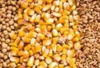 رشد ۱۳ درصدی ارزش معامله محصولات کشاورزی در بورس کالا