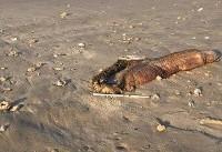 کشف موجود دریایی عجیب در سواحل تگزاس